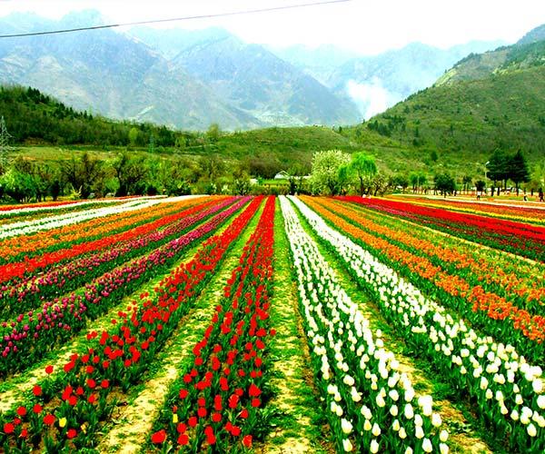 Srinagar-Gulmarg-Pahalgam-Sonmarg